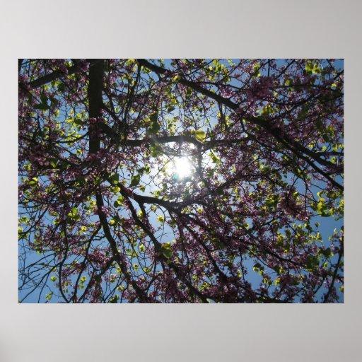 poster floreciente del árbol