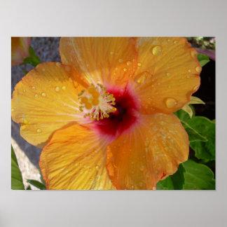 Poster floreciente del hibisco