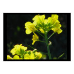 Poster - flores amarillas