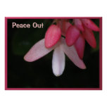 Poster - flores de la paz - fucsia