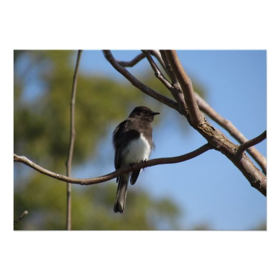 Poster - Flycatcher