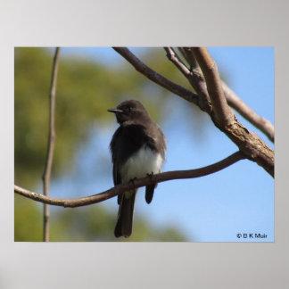 Poster - Flycatcher profile