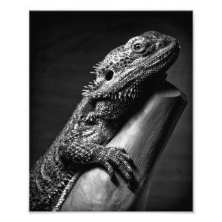 Poster fotográfico del dragón barbudo cojinete