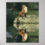 Poster - Fox en el río