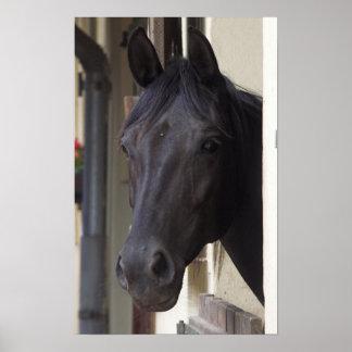 Poster frisio excelente del caballo