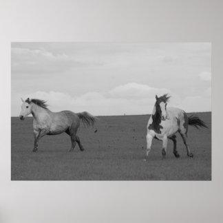 Poster galopante de la lona de los caballos