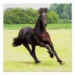 Poster galopante del caballo