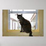 Poster, gato de calicó