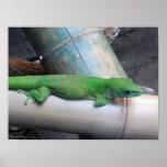 Poster gigante de la foto del Gecko del día de Mad