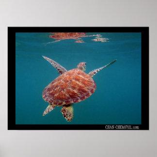 Poster gigante de la tortuga de mar