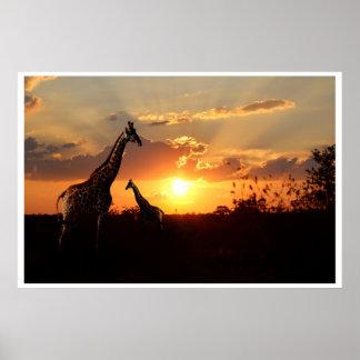 Poster Giraffes at an African Sunset