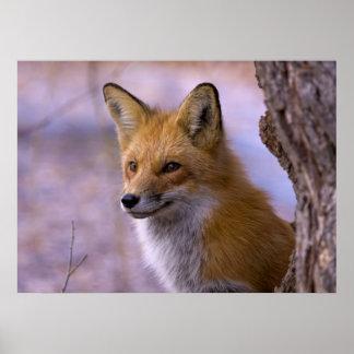 Poster grande del Fox