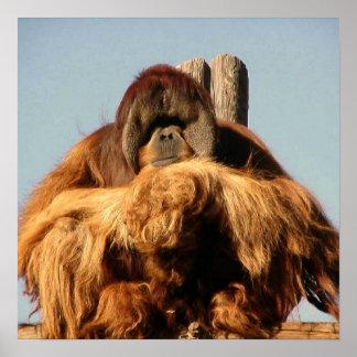 Poster grande del mono