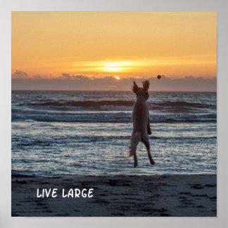 """Poster """"grande"""" vivo de la puesta del sol de la"""