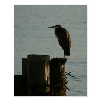 Poster:  Great Blue Heron Poster