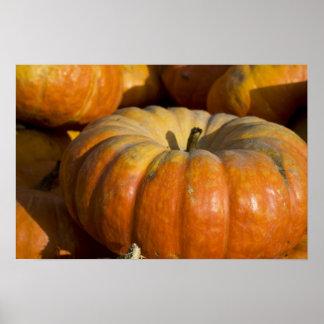 Poster:  Great Pumpkin Poster