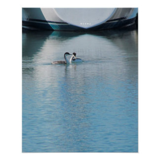 Poster - Grebes on Calm Harbor