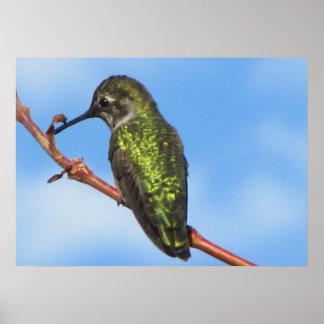 Poster--Green Hummingbird