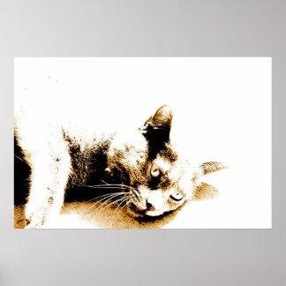 Poster gris del gato