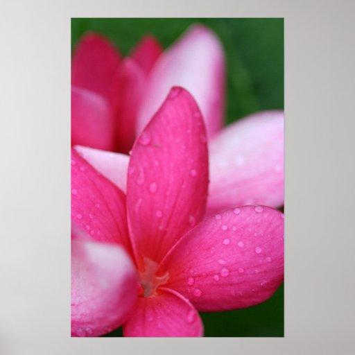 Poster hawaiano de la flor
