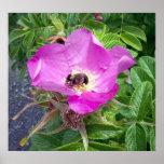 Poster hermoso de la abeja