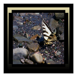 Poster hermoso de la mariposa póster