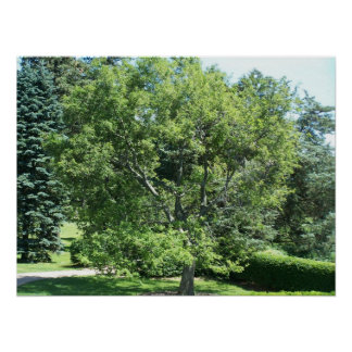 Poster hermoso del árbol