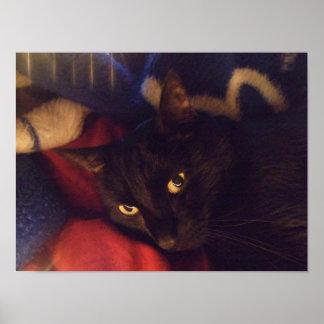 Poster hermoso del gato negro
