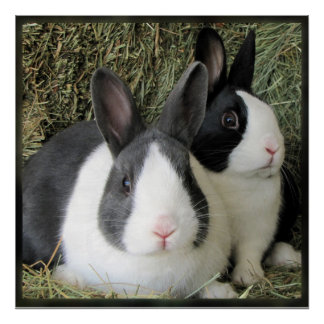 Poster holandés de 2 conejos