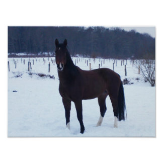 Poster - horse in the snow