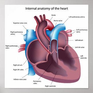Poster humano de la anatomía del corazón