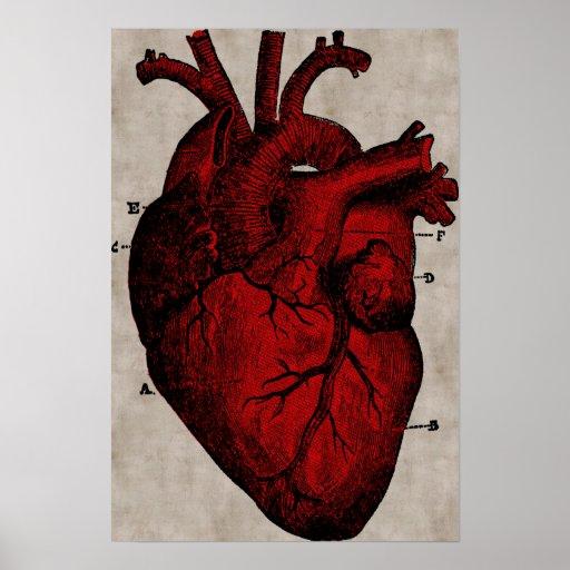 Poster humano del corazón