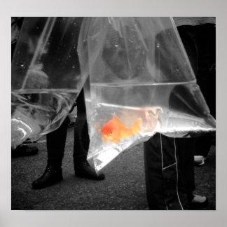 Poster/imagen curiosos del Goldfish