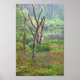 Poster/impresión brumosos del pantano