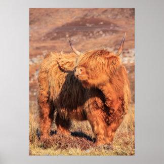 Poster/impresión de la vaca de la montaña póster