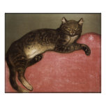 Poster/impresión del arte del gato: Gato estirado