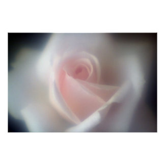 Poster/impresión grandes color de rosa rosados