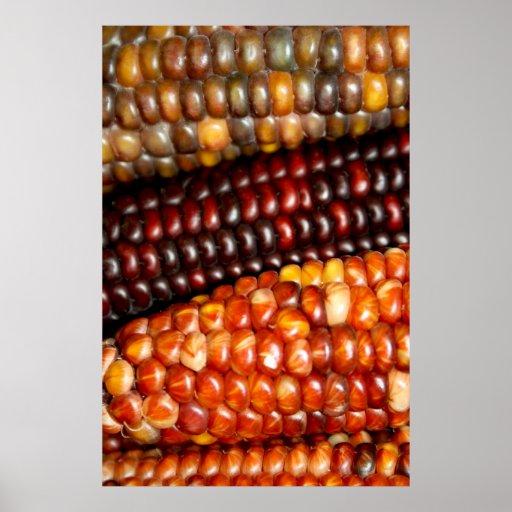 Poster/impresión indios del maíz en la mazorca