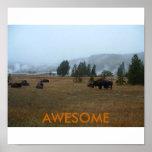 Poster impresionante del búfalo