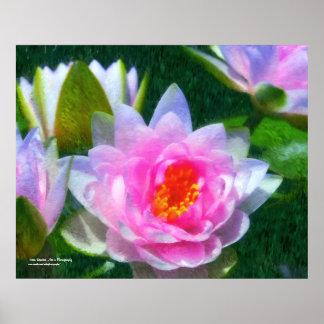 Poster impresionista de Waterlilies