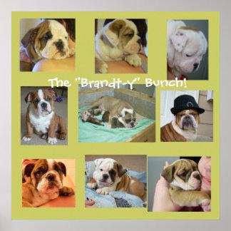 Poster inglés de los perritos del dogo