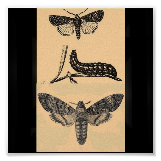 Poster-Insects-Vintage Butterfly Illustrations Poster