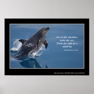Poster inspirado del delfín
