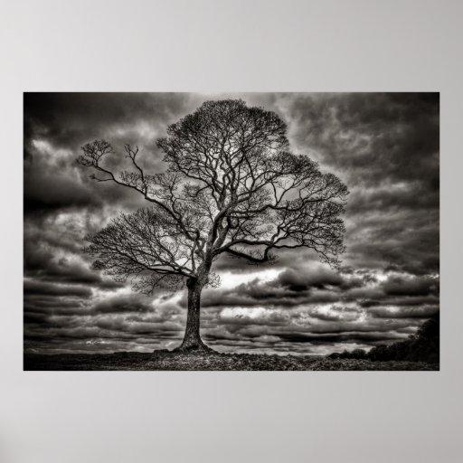 Poster intemporal blanco y negro del árbol