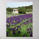 POSTER - iris de Van Gogh