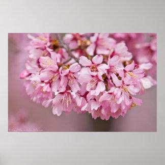 Poster japonés de la flor de cerezo del ramo de la
