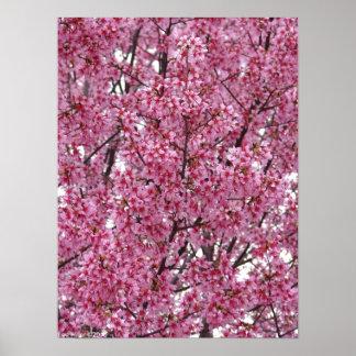 Poster japonés de la pared de las flores de cerezo