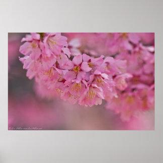 """""""Poster japonés de las flores de cerezo de la nieb Póster"""