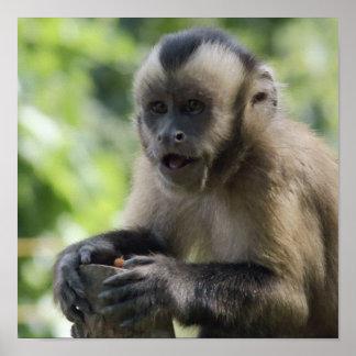 Poster juguetón del mono