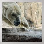 Poster juguetón del oso polar